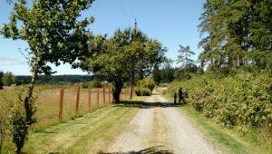 Blackberry_picking_on_Snell_Farm