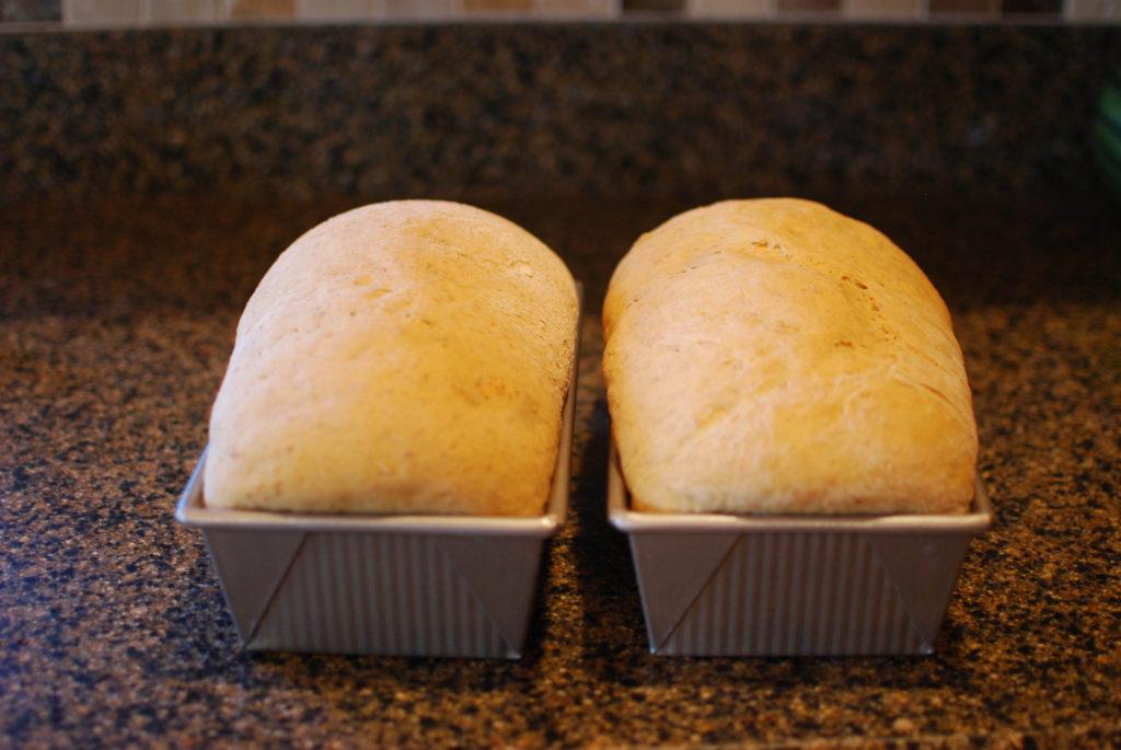 Cinnamon Bread ready to go into the over